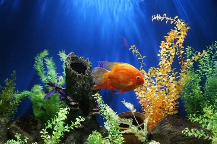Buying Aquarium Deco: 6 Things to Consider